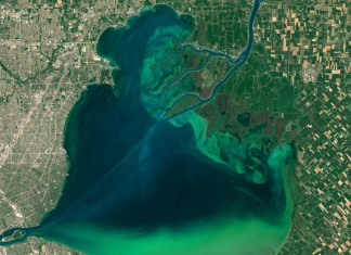 algae bloom on lake st. clair