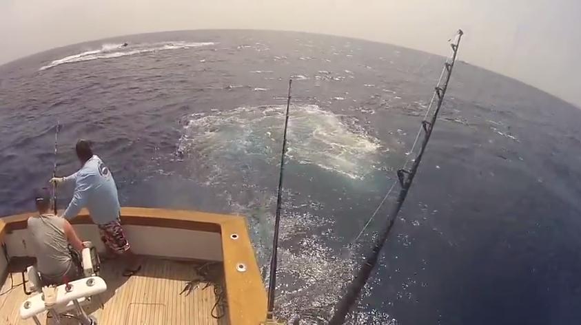 reeling in a blue marlin