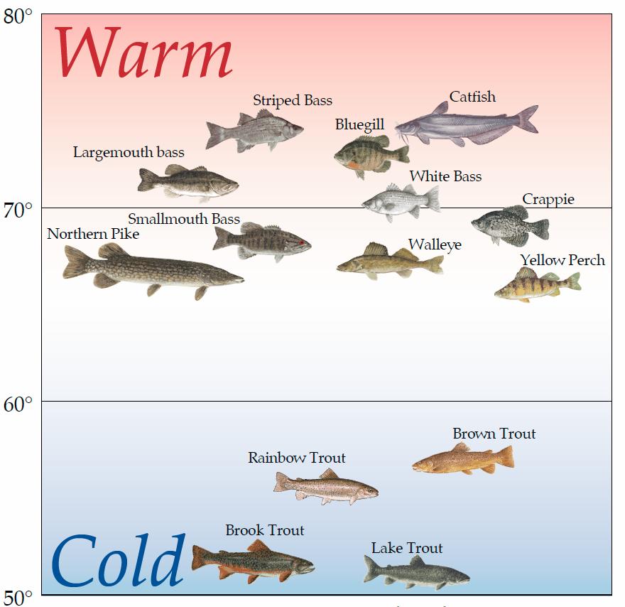 L'eau tempérée préférée par les espèces